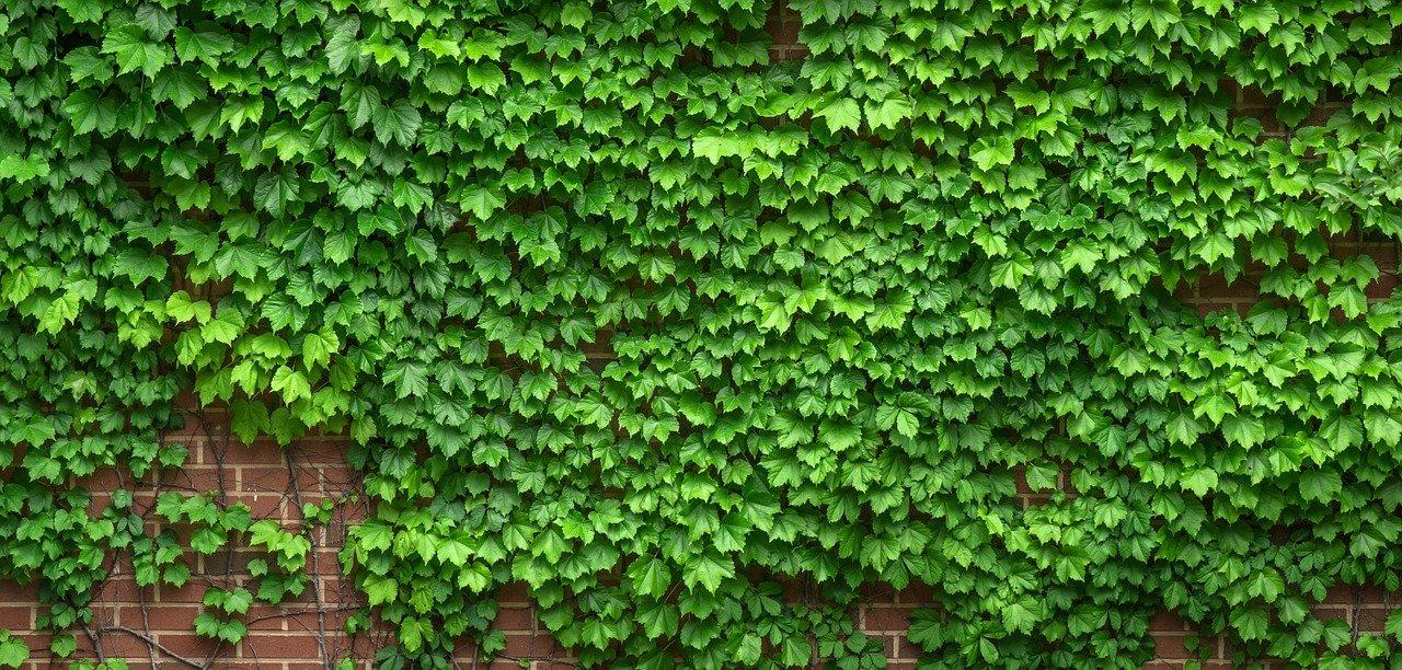 Wandgarten - wie geht das